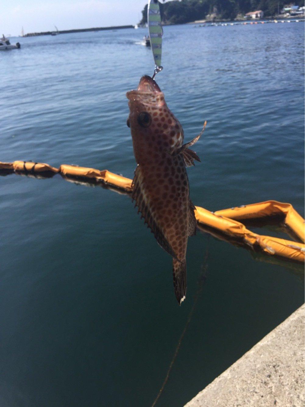 夏遥さんの投稿画像,写っている魚はオオモンハタ