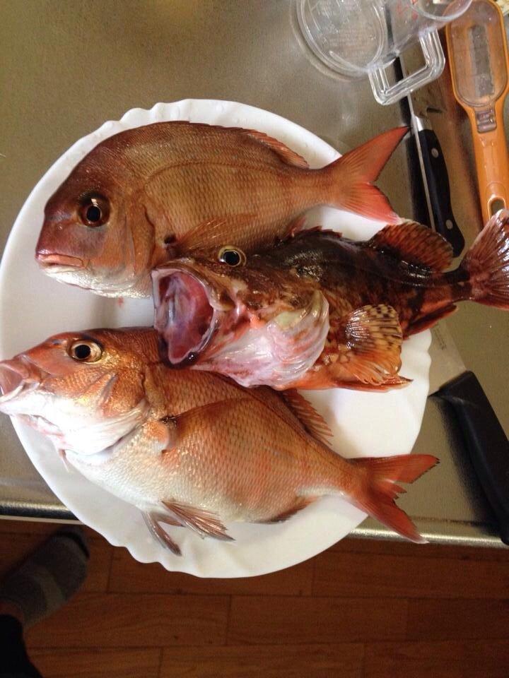 ケンタのパパさんの投稿画像,写っている魚はカサゴ