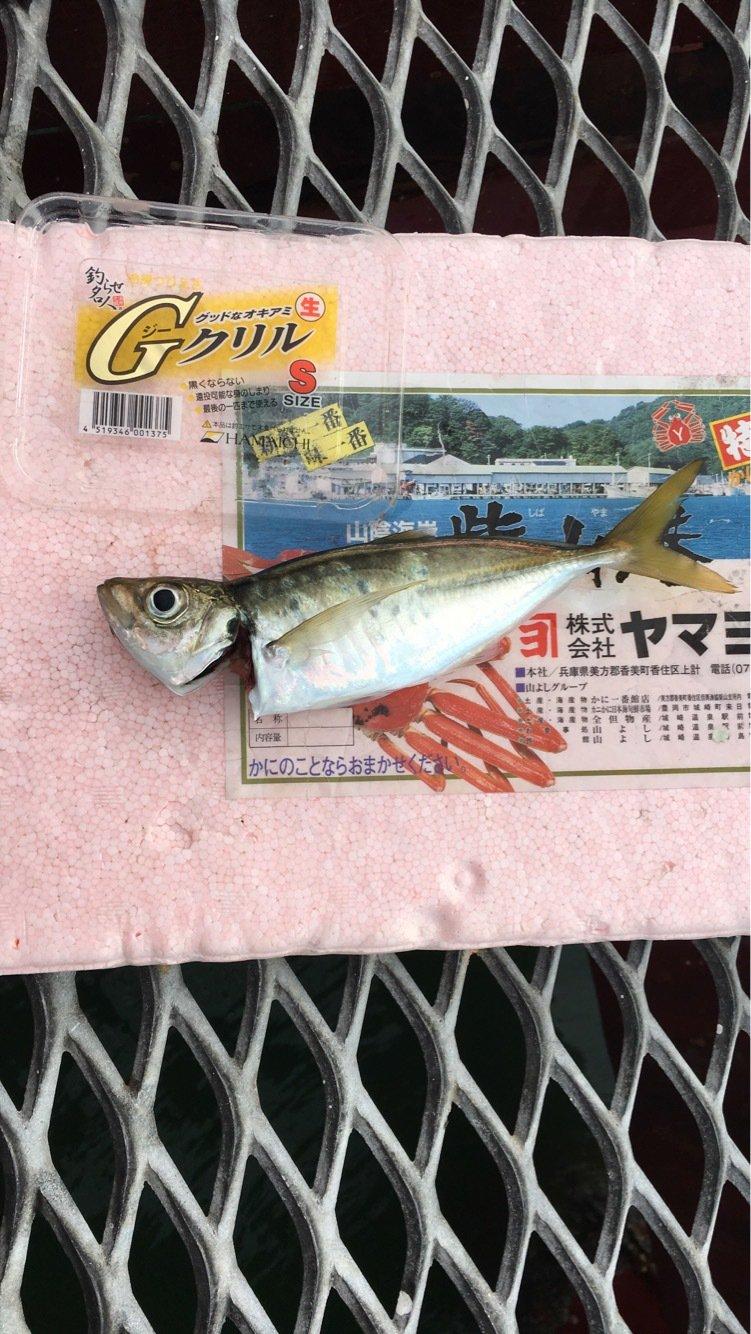 spiderさんの投稿画像,写っている魚はアジ