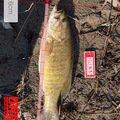 uk21さんの長野県中野市での釣果写真