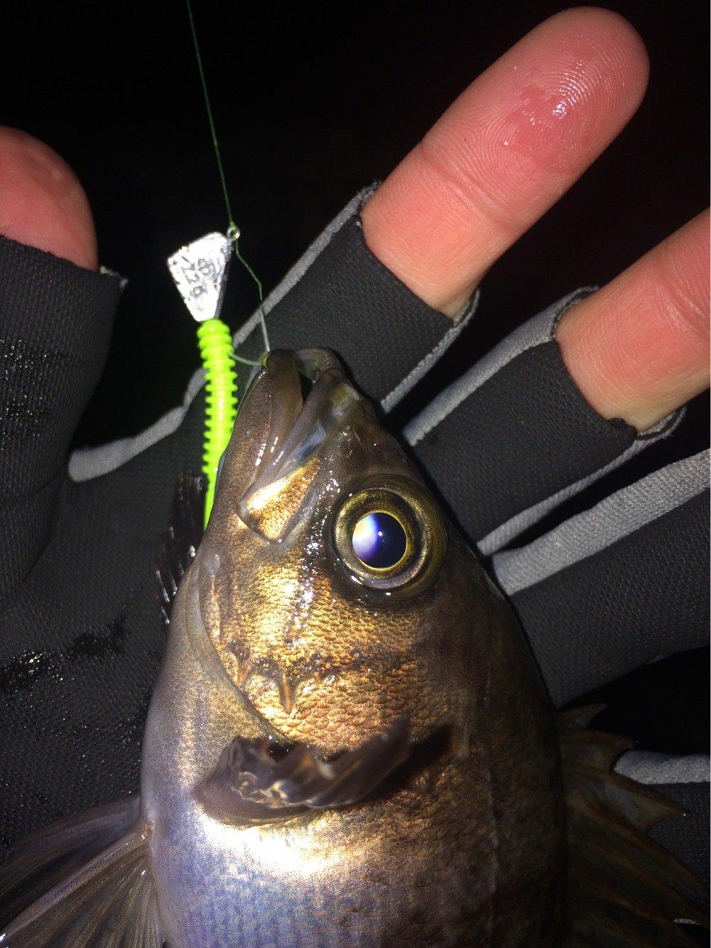 ささきょんさんの投稿画像,写っている魚はメバル