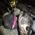 Detsroさんの長野県塩尻市での釣果写真