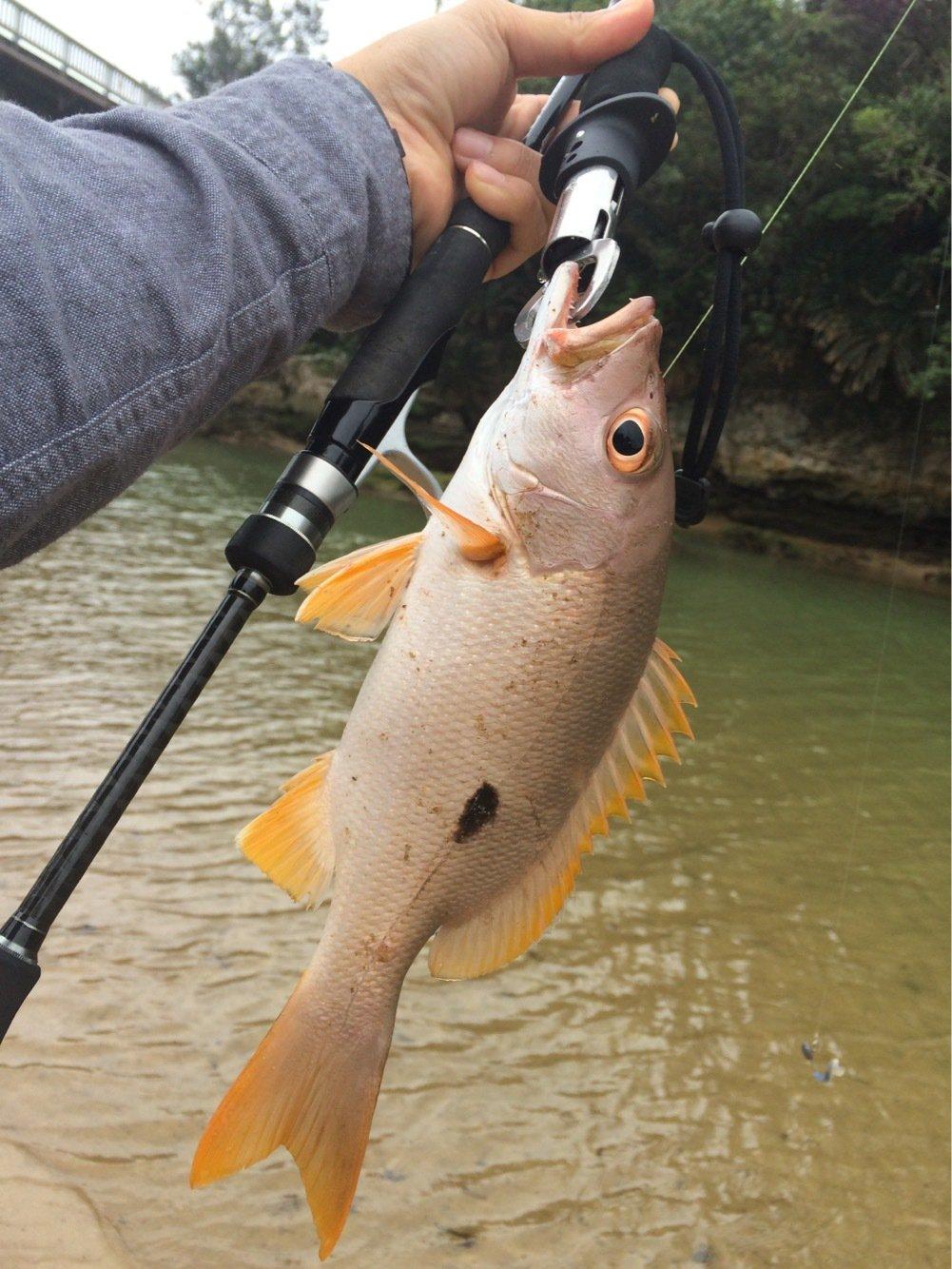 yamachaaanさんの投稿画像,写っている魚はイッテンフエダイ