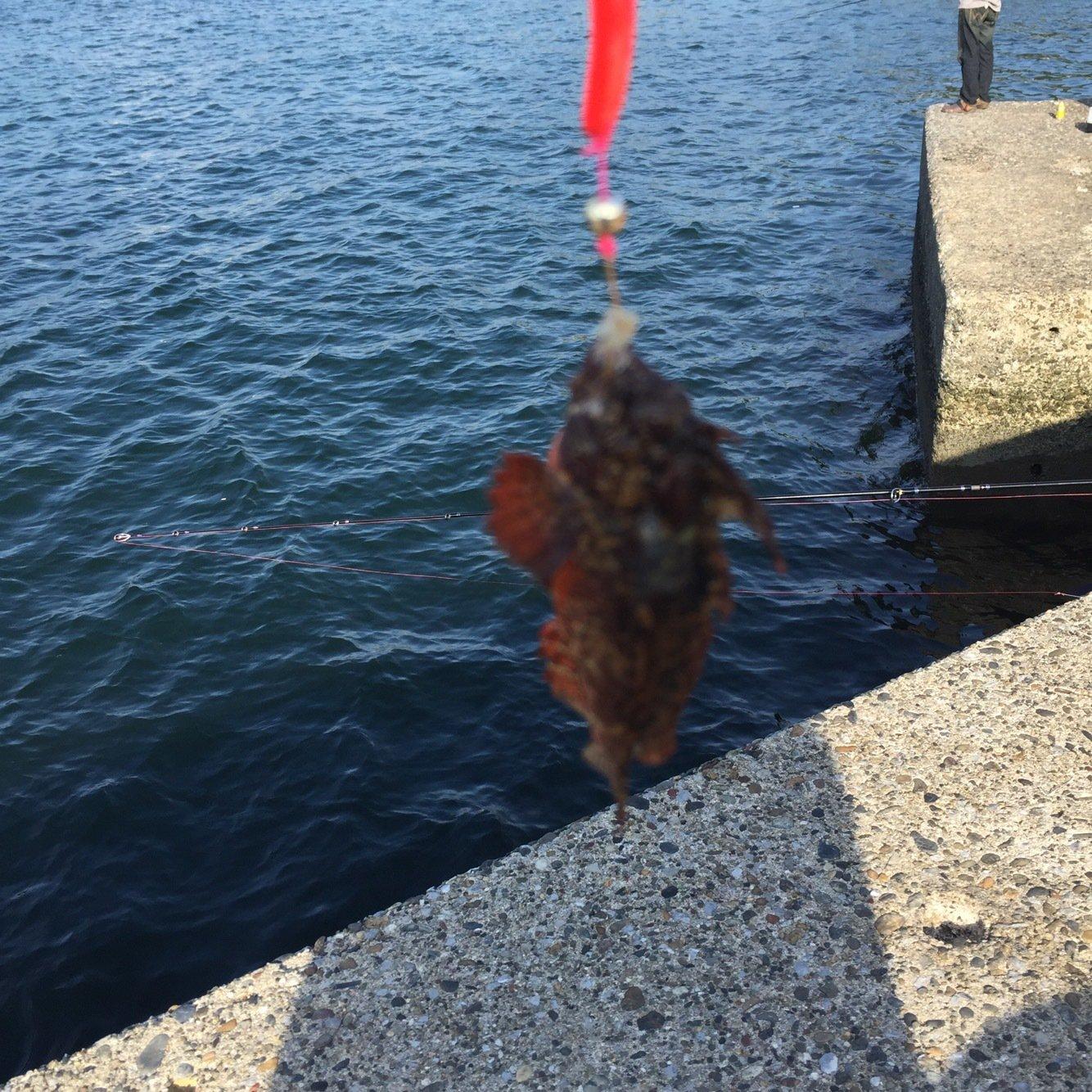 なみともさんの投稿画像,写っている魚はアカカサゴ