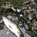 佐藤 俊之さんの北海道稚内市での釣果写真