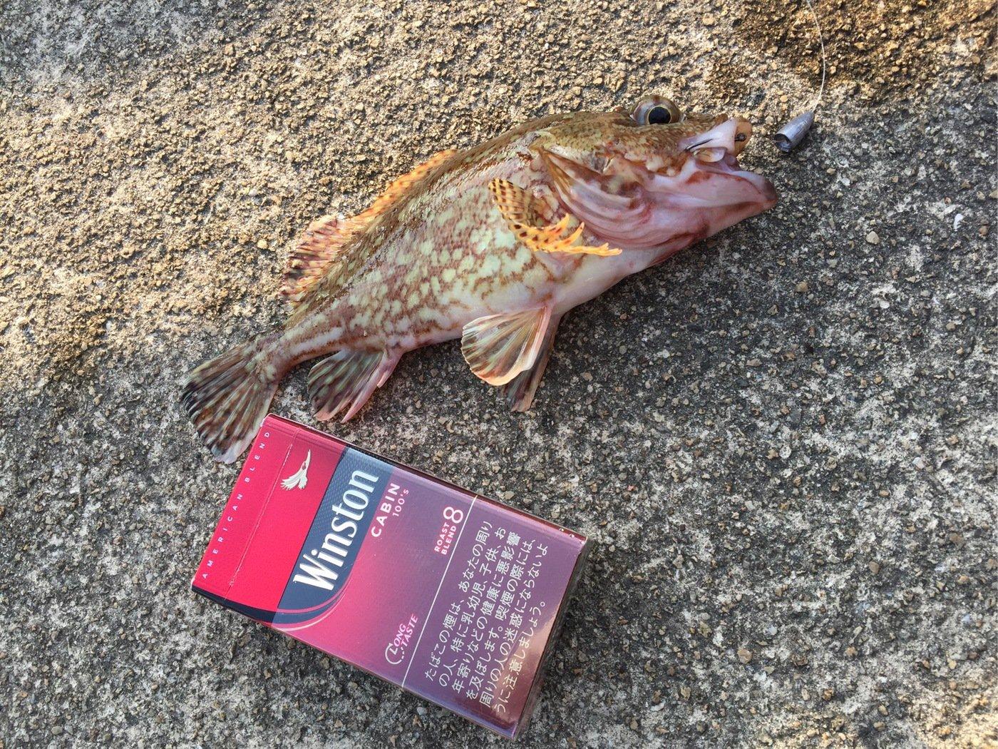 K1さんの投稿画像,写っている魚は