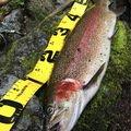 澤村星汰さんの北海道阿寒郡での釣果写真