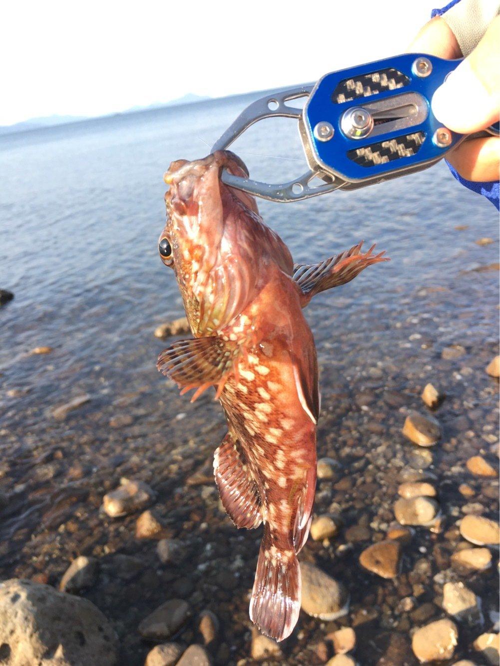 ゆうたさんの投稿画像,写っている魚はカサゴ