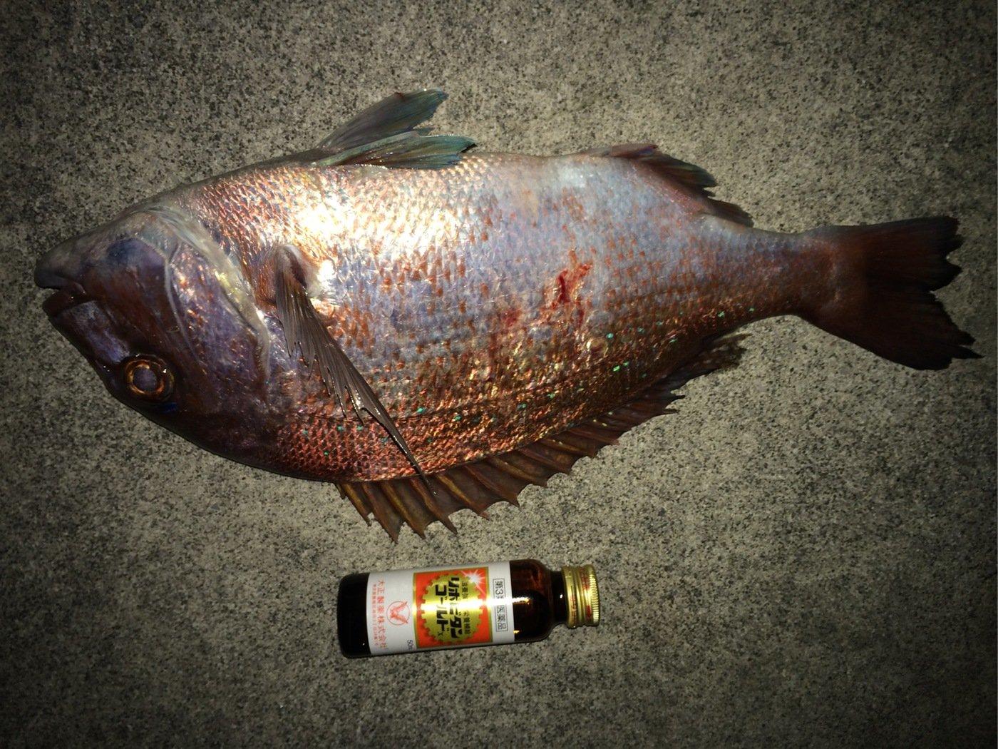 かみーゆさんの投稿画像,写っている魚はマダイ