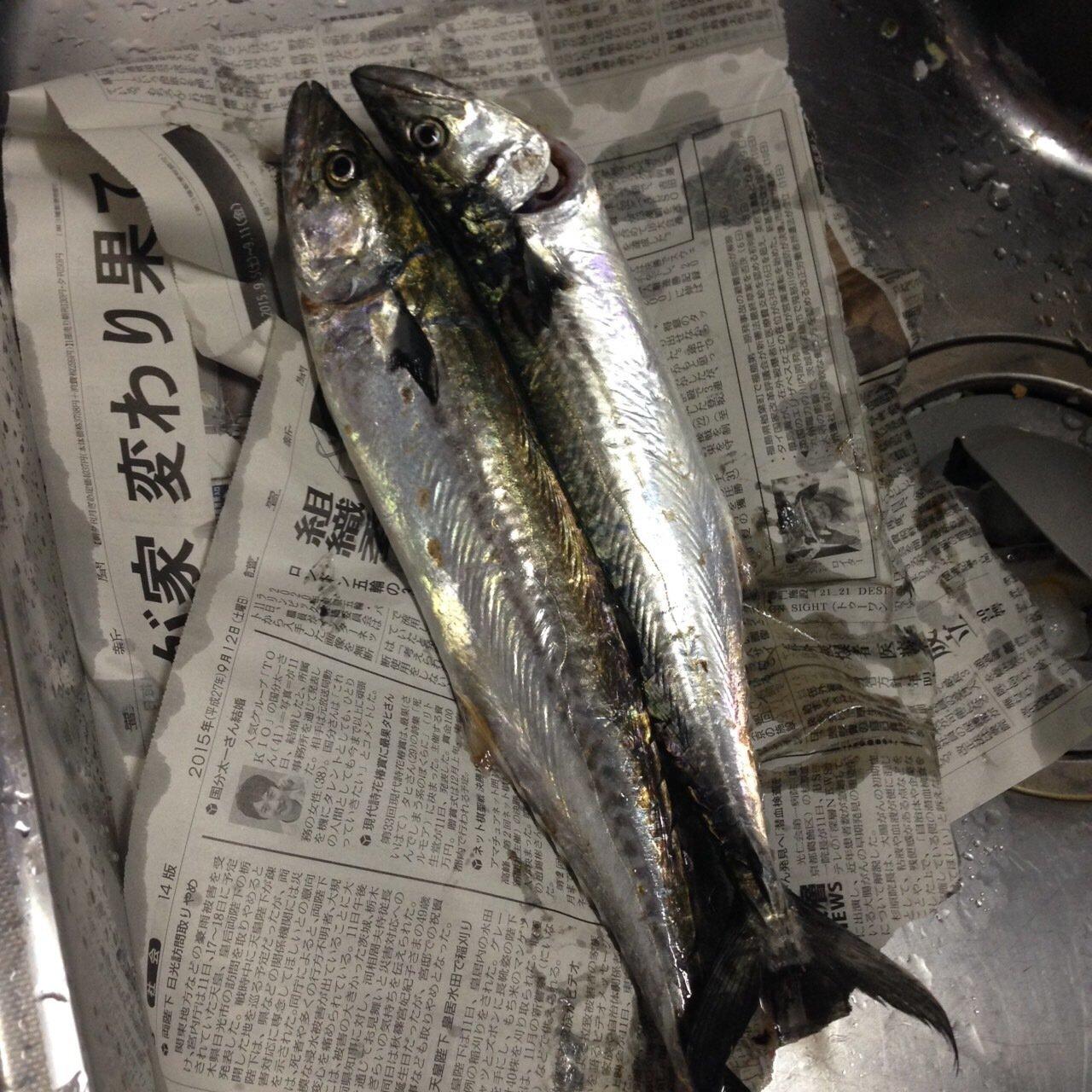 しゅーさんの投稿画像,写っている魚はサワラ
