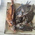 Loyle Sheltonさんのタカサゴの釣果写真