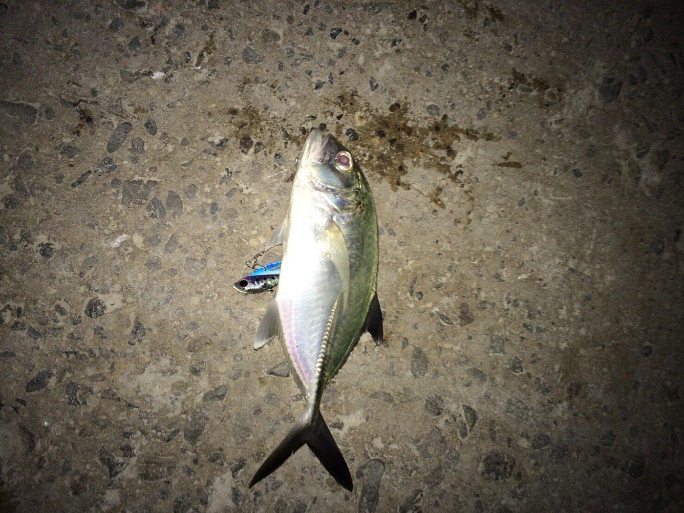 ヤスさんの投稿画像,写っている魚はギンガメアジ