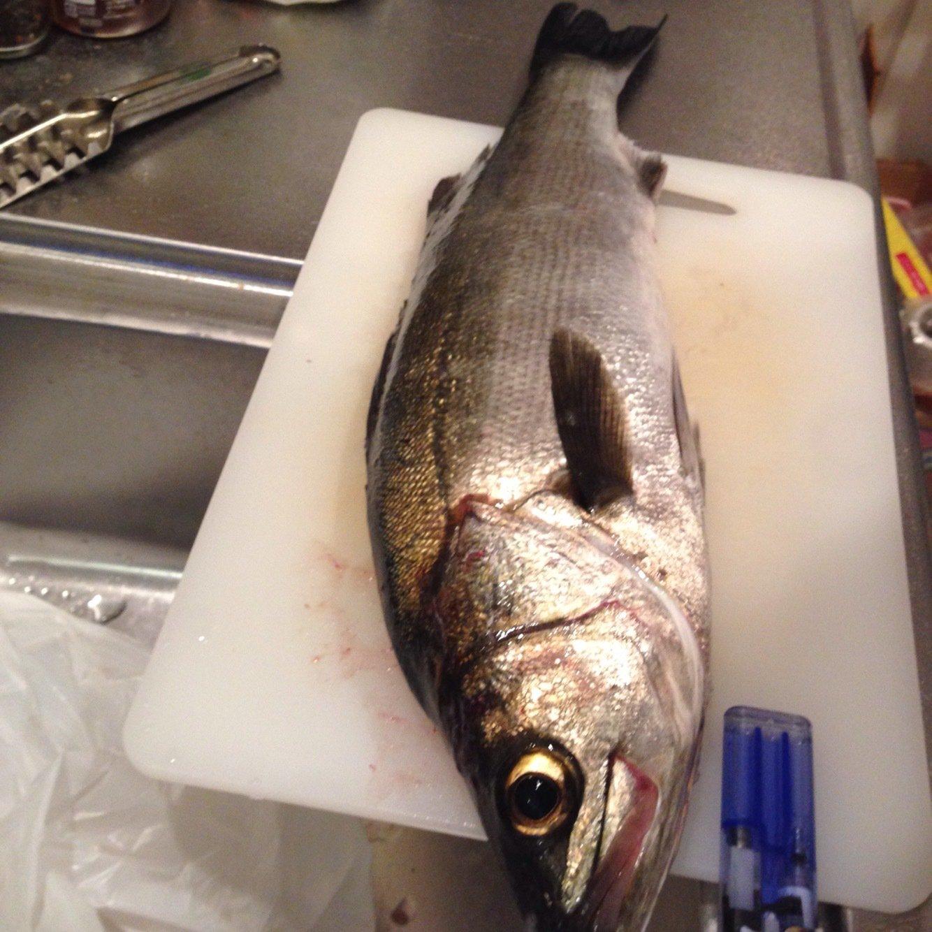 あっちさんの投稿画像,写っている魚はスズキ
