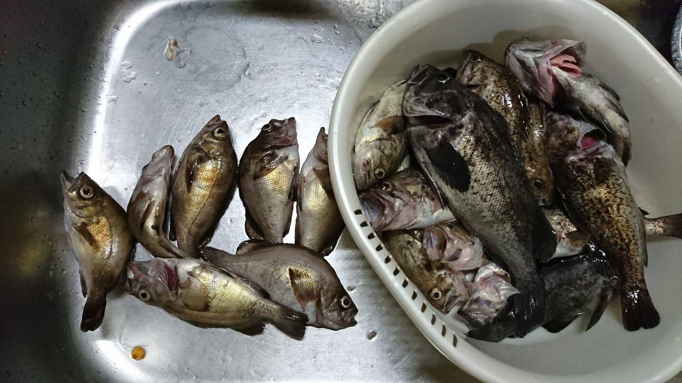 凪さんの投稿画像,写っている魚はシロメバル