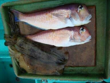 はちおさんの投稿画像,写っている魚はアマダイ