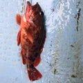 ひでくろうさんの千葉県匝瑳市での釣果写真