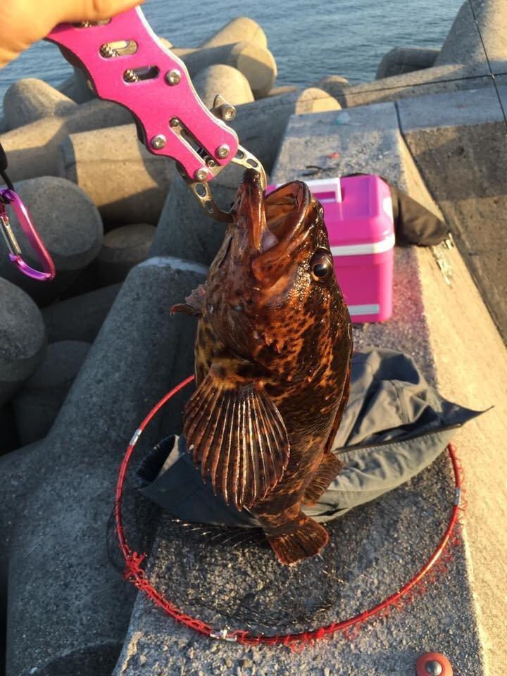 いりすさんの投稿画像,写っている魚はタケノコメバル