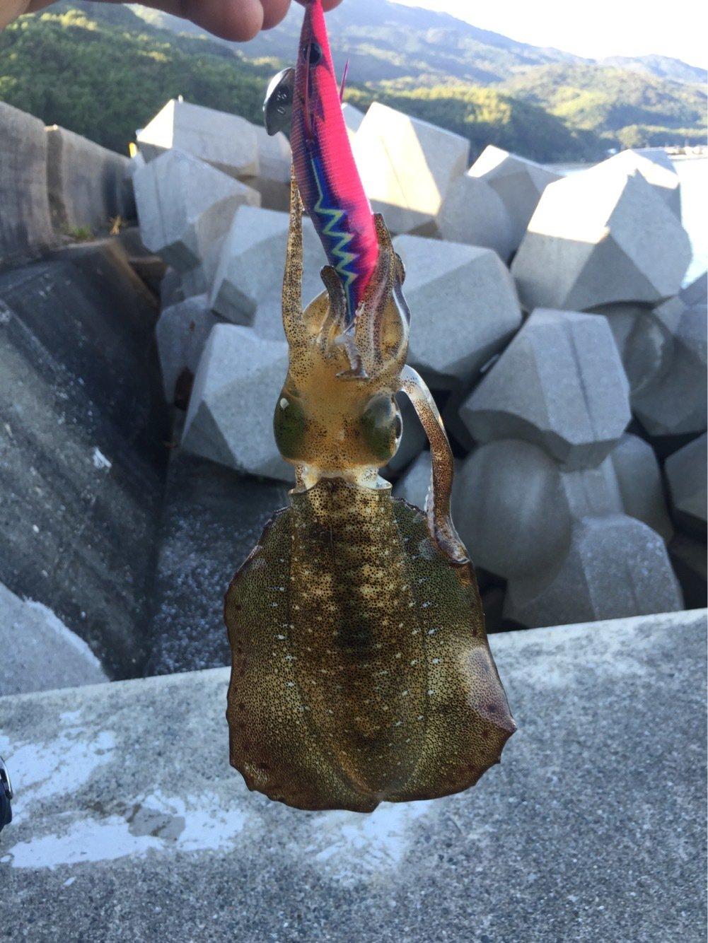 Redhorseさんの投稿画像,写っている魚はアオリイカ