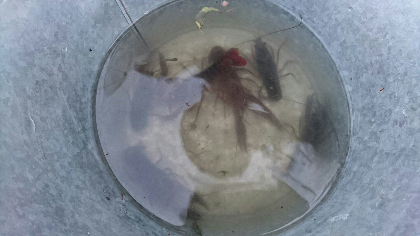 バルたんさんの投稿画像,写っている魚は