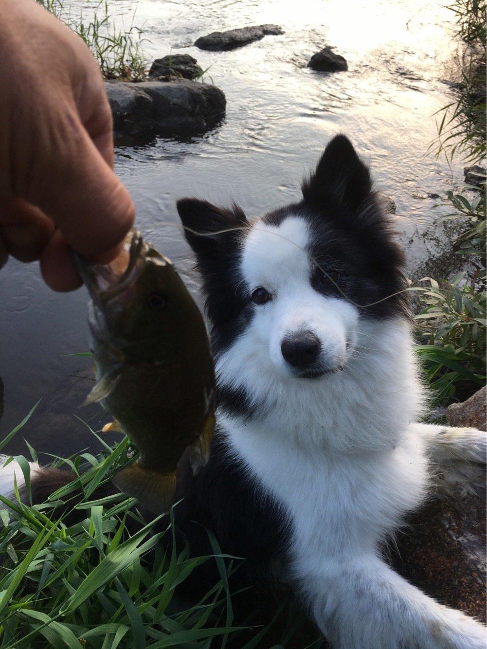 ラッキーさんの投稿画像,写っている魚はスモールマウスバス