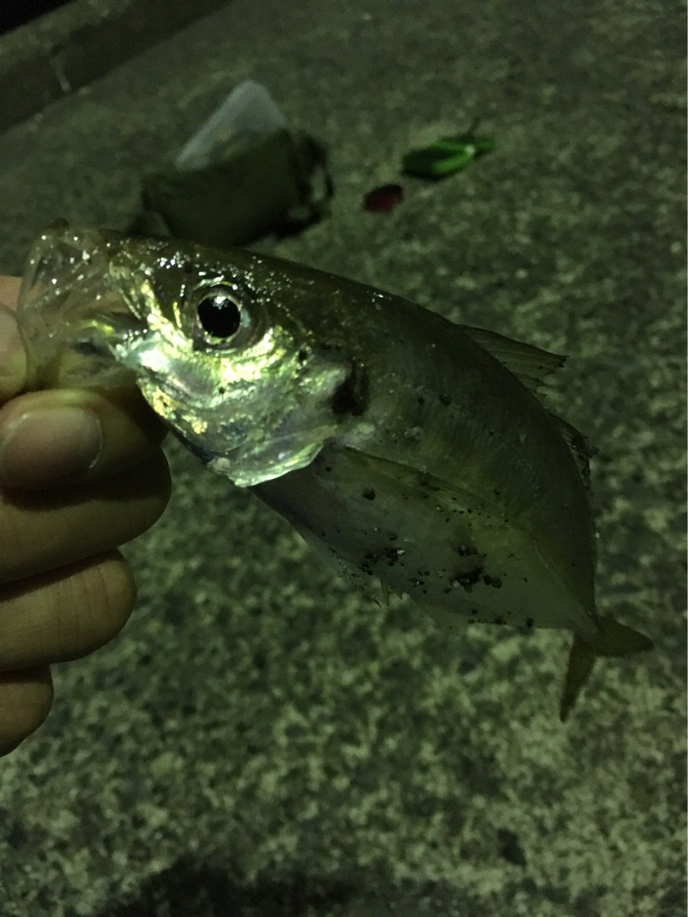 Ryoさんの投稿画像,写っている魚はアジ