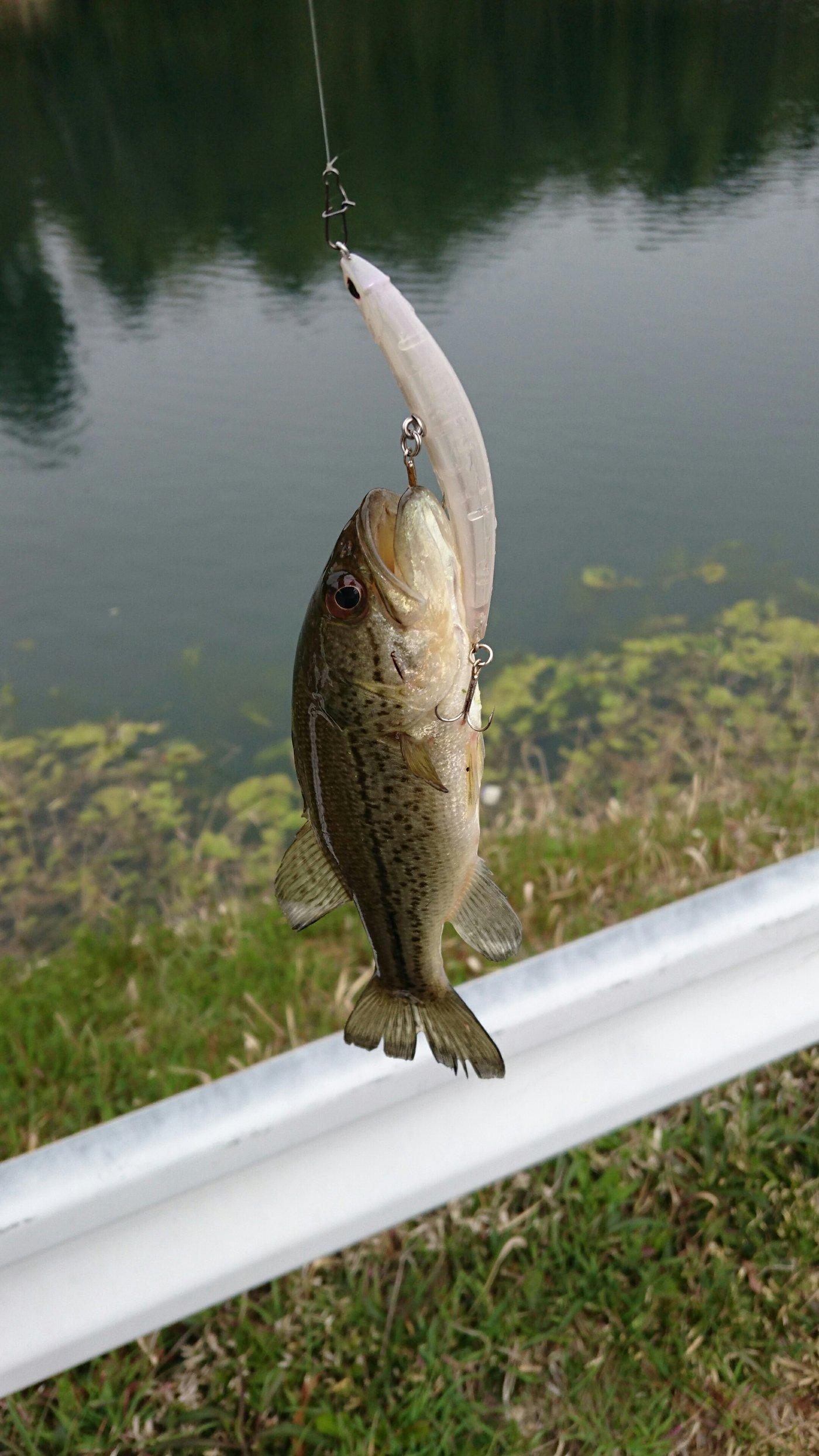 ふねさんの投稿画像,写っている魚はブラックバス