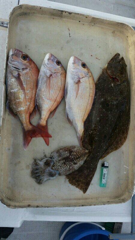 なんとかさんの投稿画像,写っている魚はヒラメ