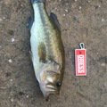 AK_heroさんの千葉県君津市での釣果写真