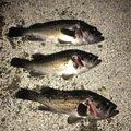 ゆうさんの北海道厚岸郡での釣果写真