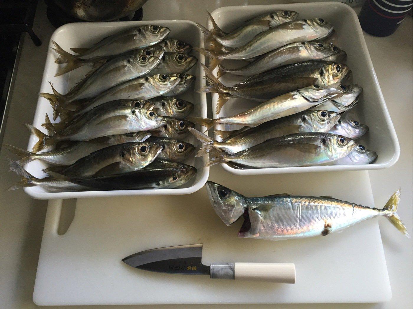 method-oneさんの投稿画像,写っている魚は