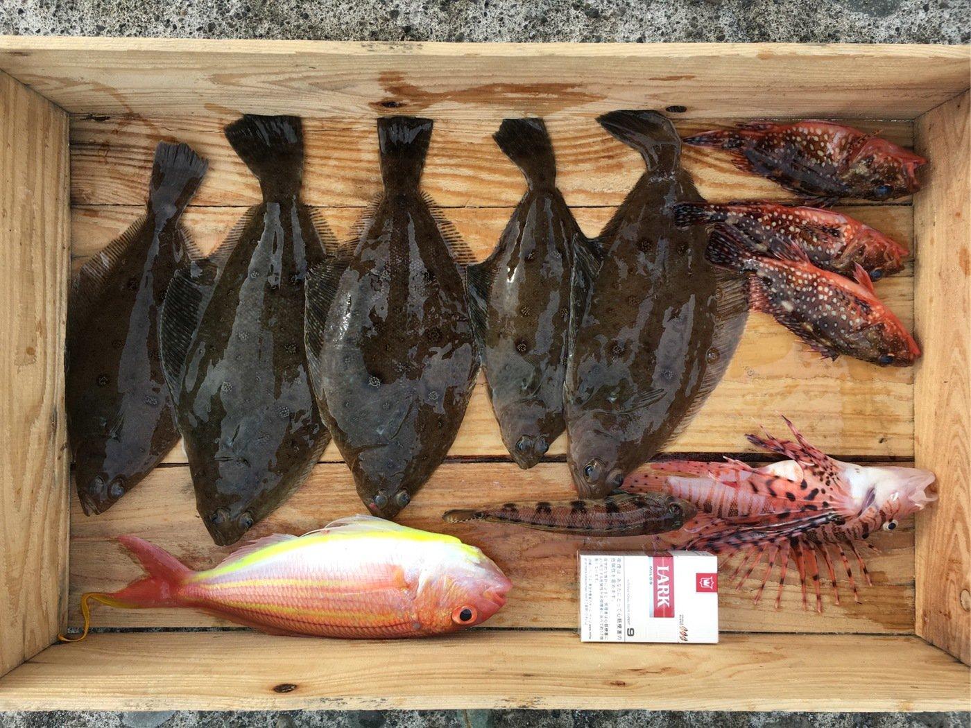 Daisukeさんの投稿画像,写っている魚はイトヨリダイ