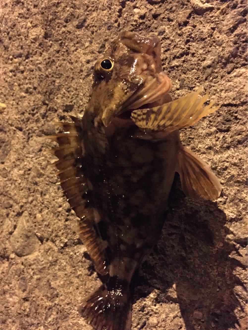さすらいスティンキーさんの投稿画像,写っている魚は