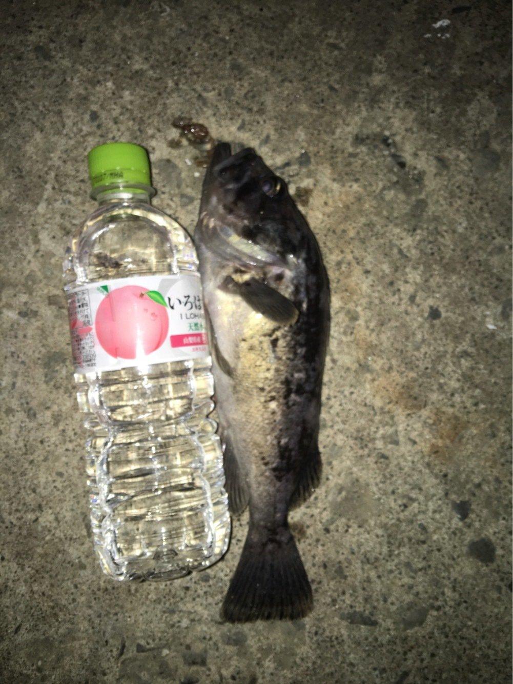 weekendさんの投稿画像,写っている魚はソイ