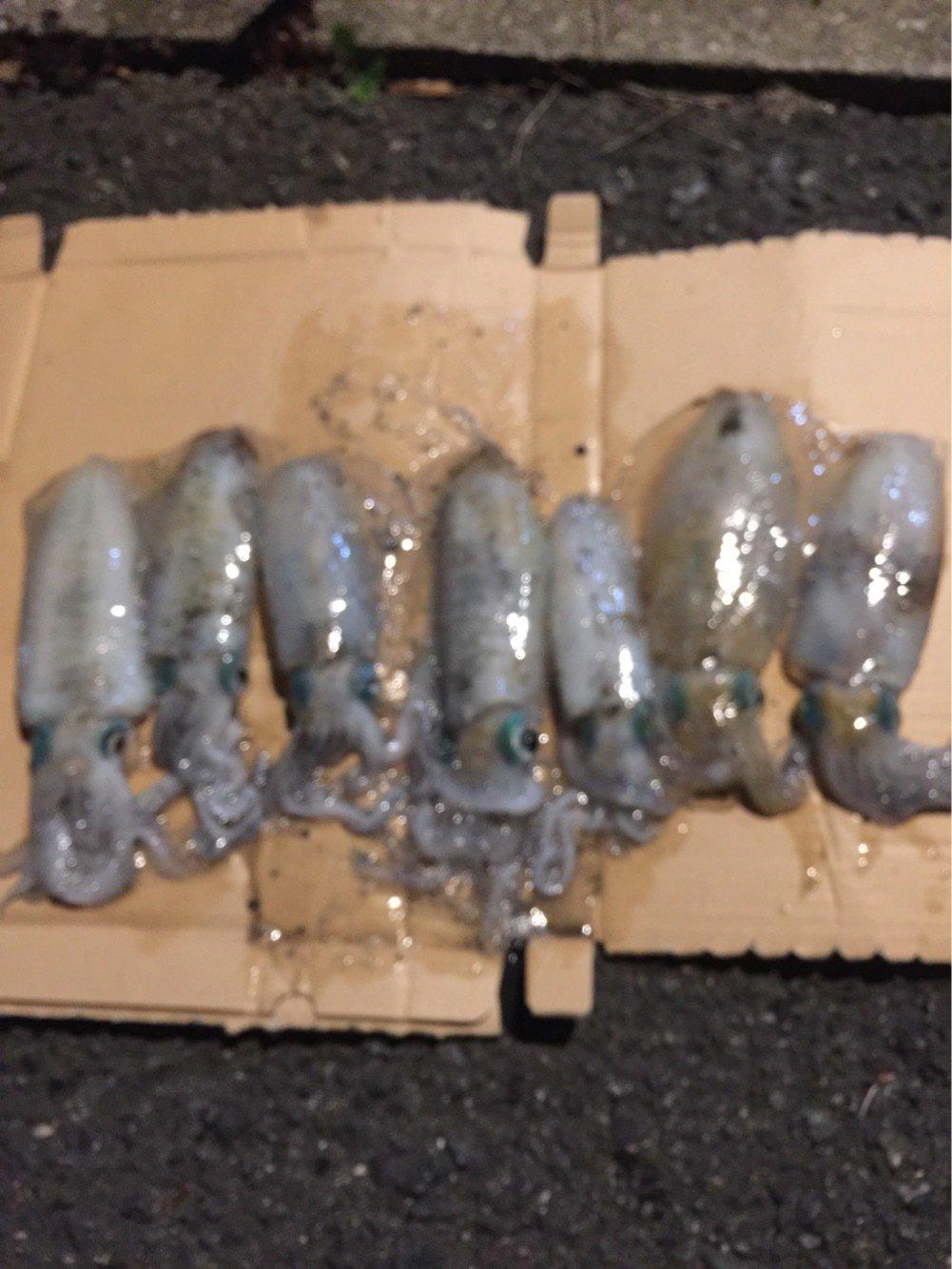 穴竜さんの投稿画像,写っている魚はアオリイカ