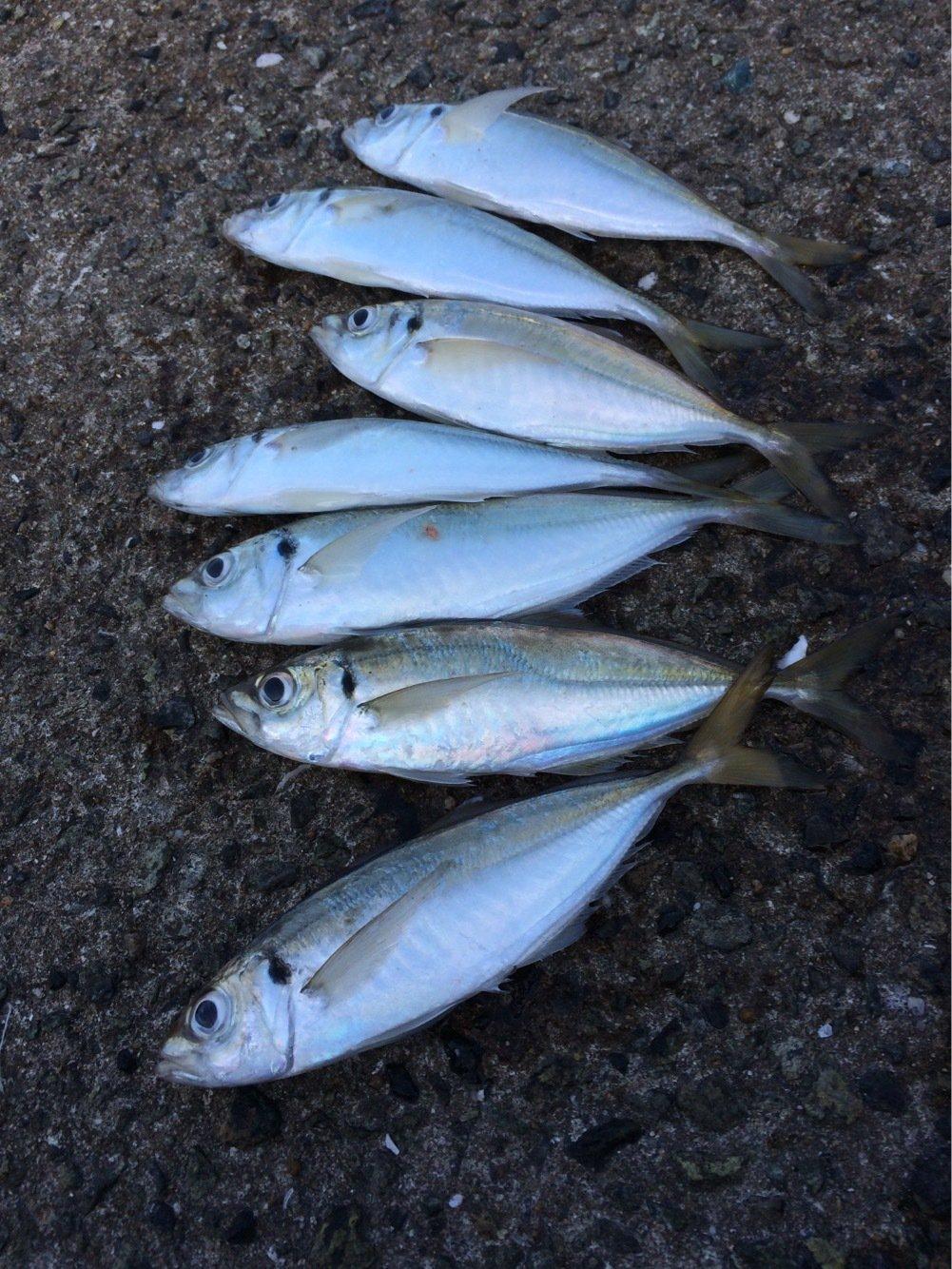 MOKOさんの投稿画像,写っている魚はアジ
