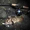 たっかぽんさんの北海道磯谷郡での釣果写真