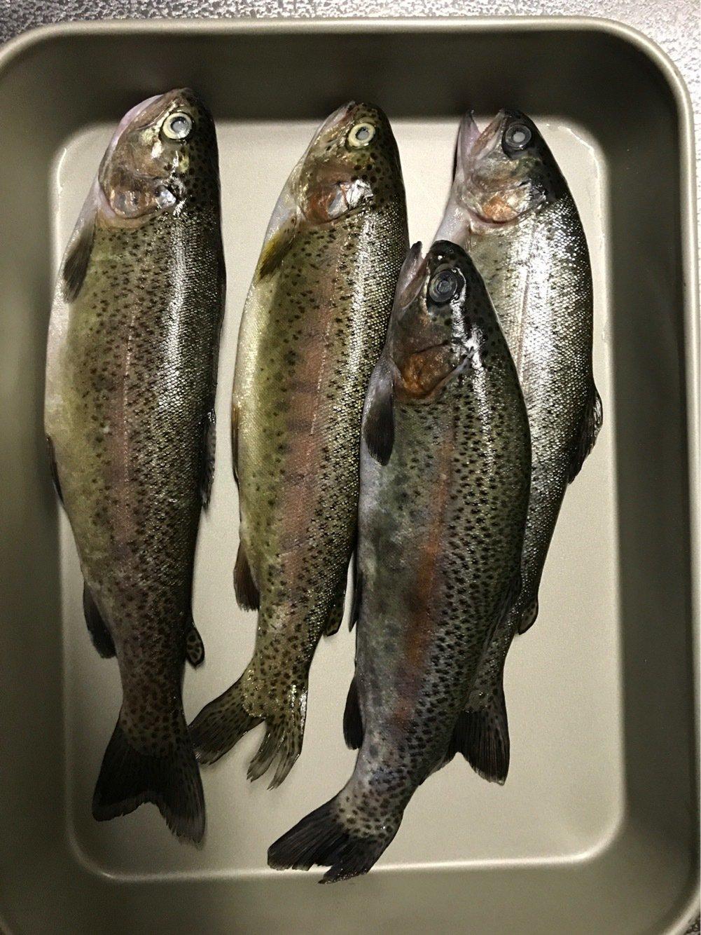 ライジングさんの投稿画像,写っている魚はニジマス