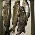 ライジングさんの鹿児島県薩摩郡での釣果写真