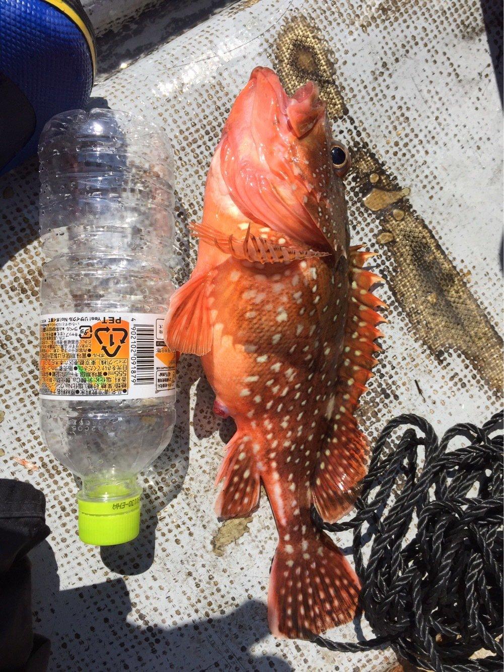 ぶっこんさんの投稿画像,写っている魚は
