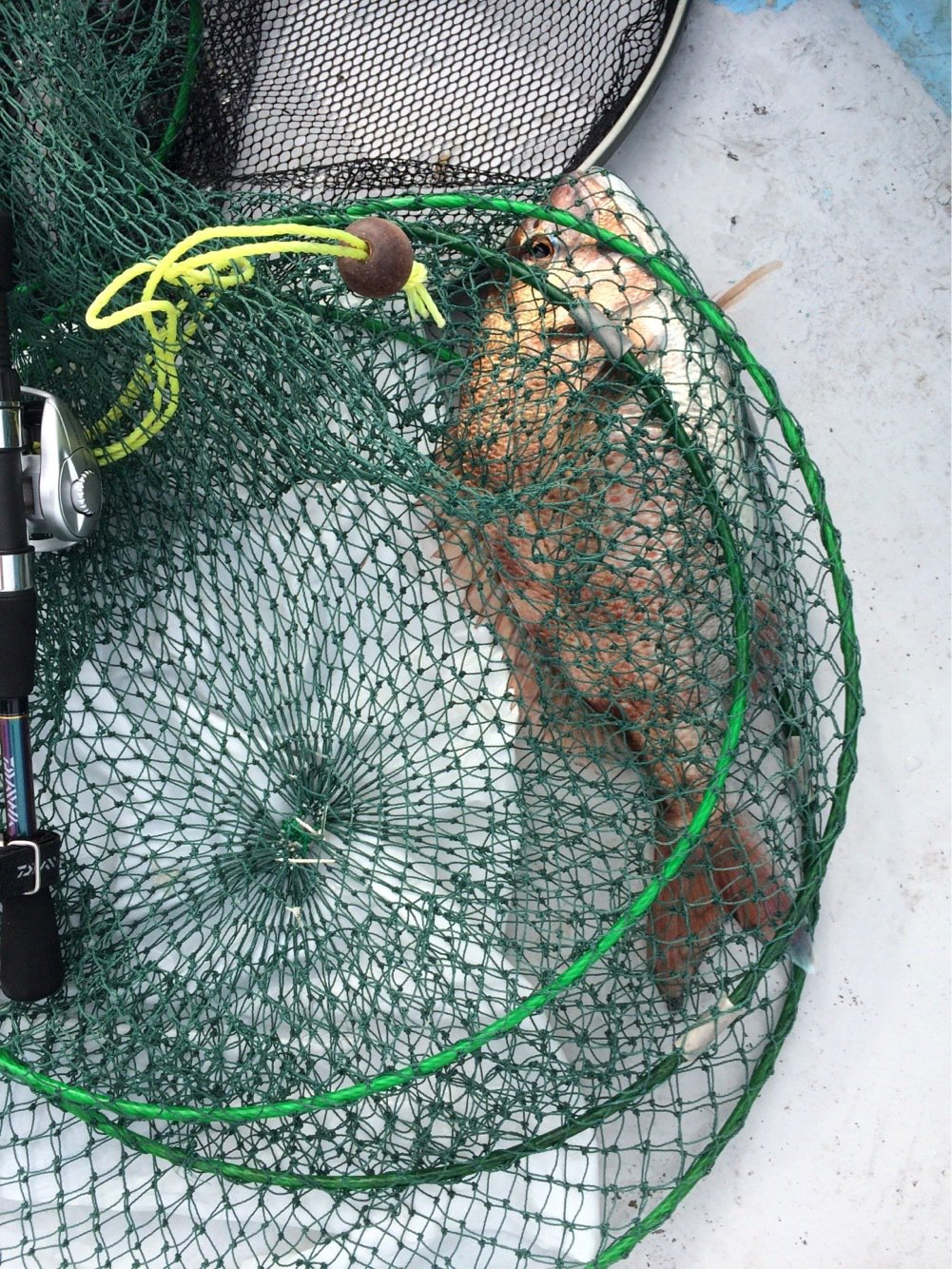 k.kobayasiさんの投稿画像,写っている魚はマダイ