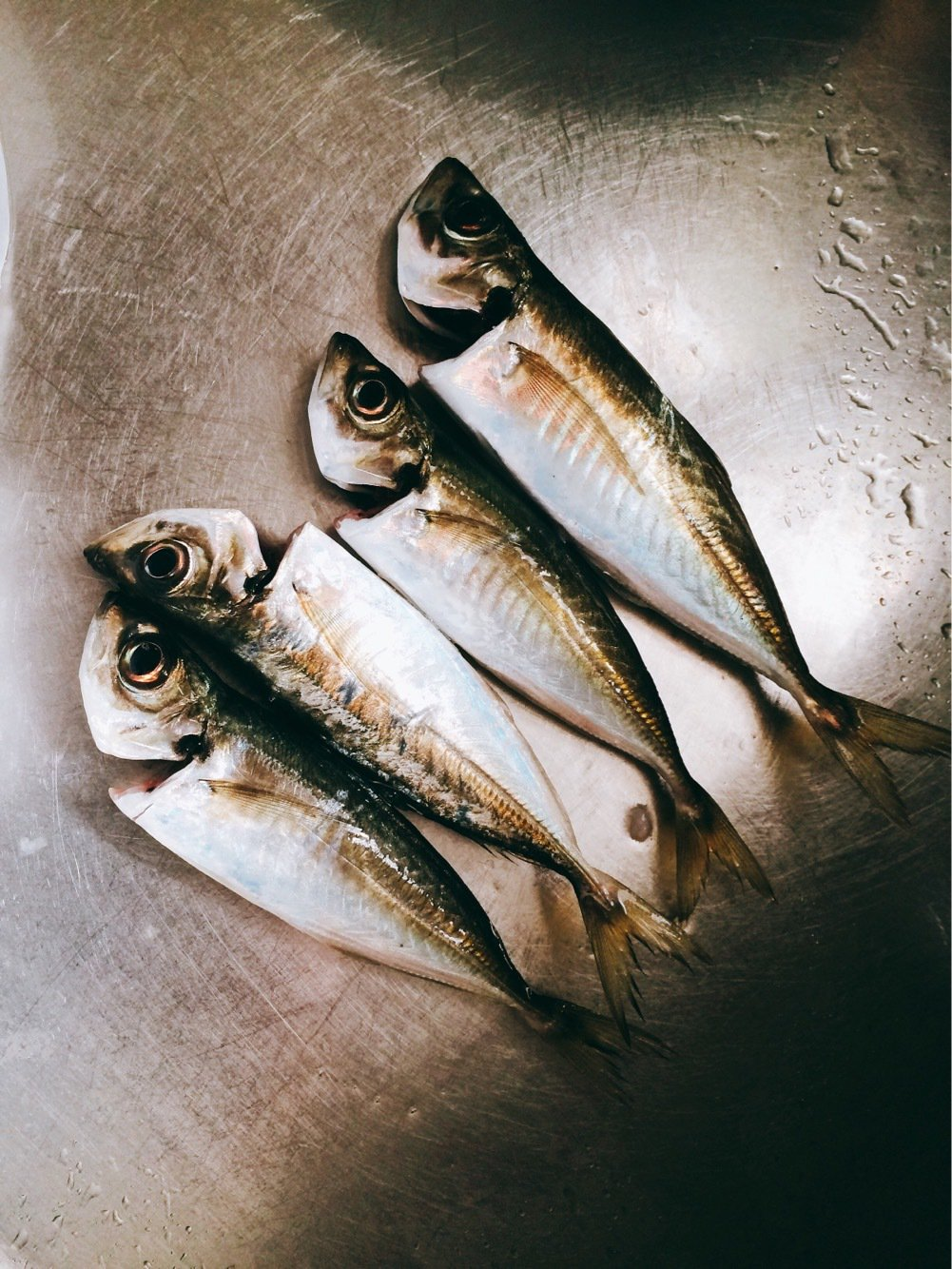 Light®️iggerさんの投稿画像,写っている魚はメバル