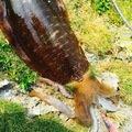GUさんの沖縄県那覇市でのアオリイカの釣果写真
