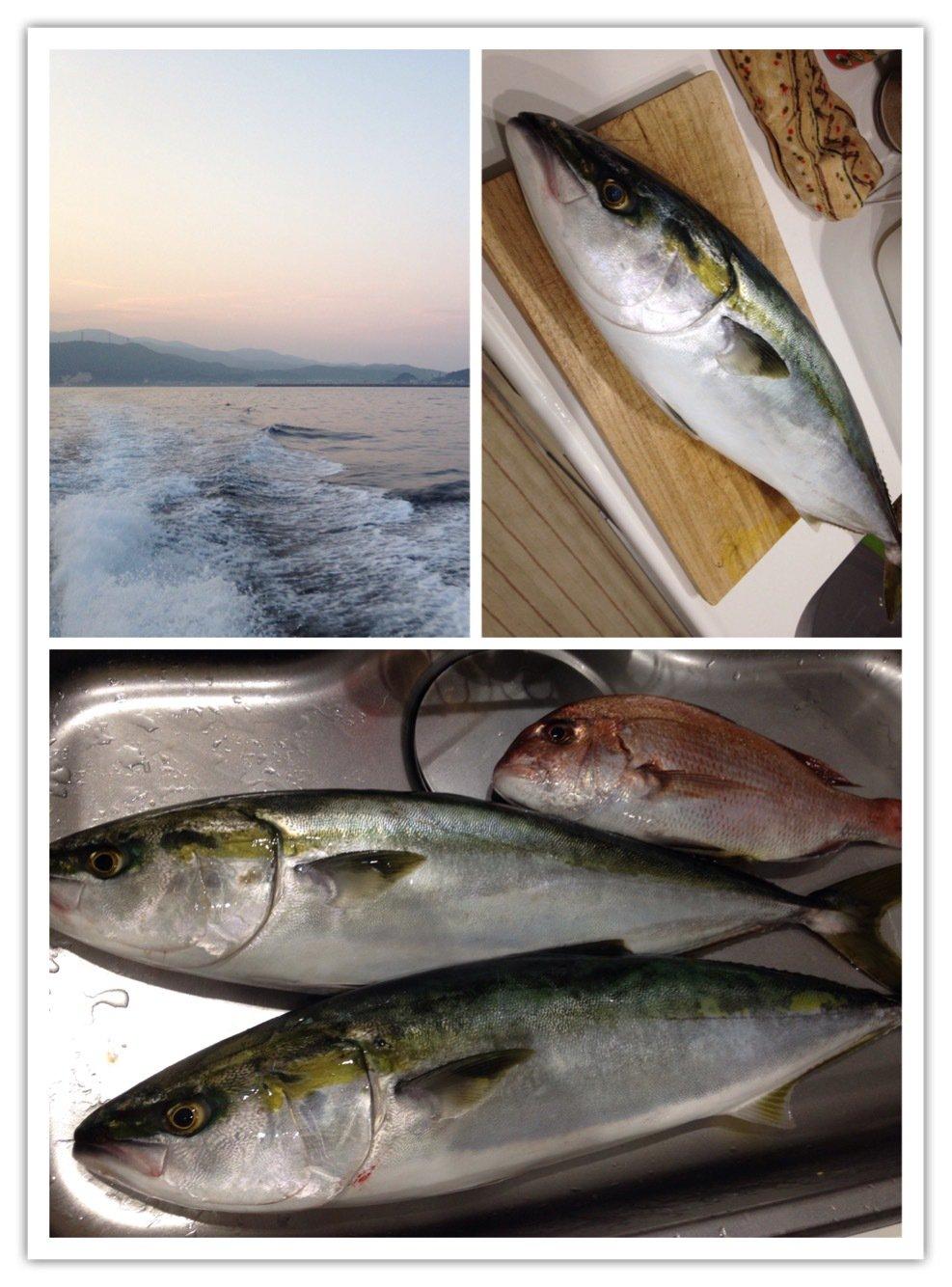 ビギにゃーさんの投稿画像,写っている魚はワラサ