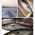 ビギにゃーさんの青森県北津軽郡でのワラサの釣果写真