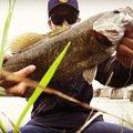 Takaさんの新潟県三条市での釣果写真