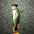 けえたさんの大阪府柏原市での釣果写真