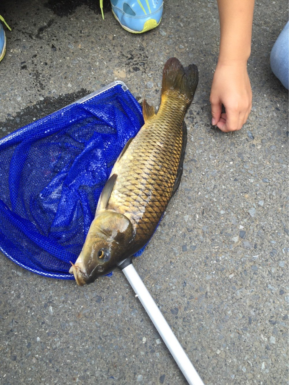 モモンガさんの投稿画像,写っている魚はコイ
