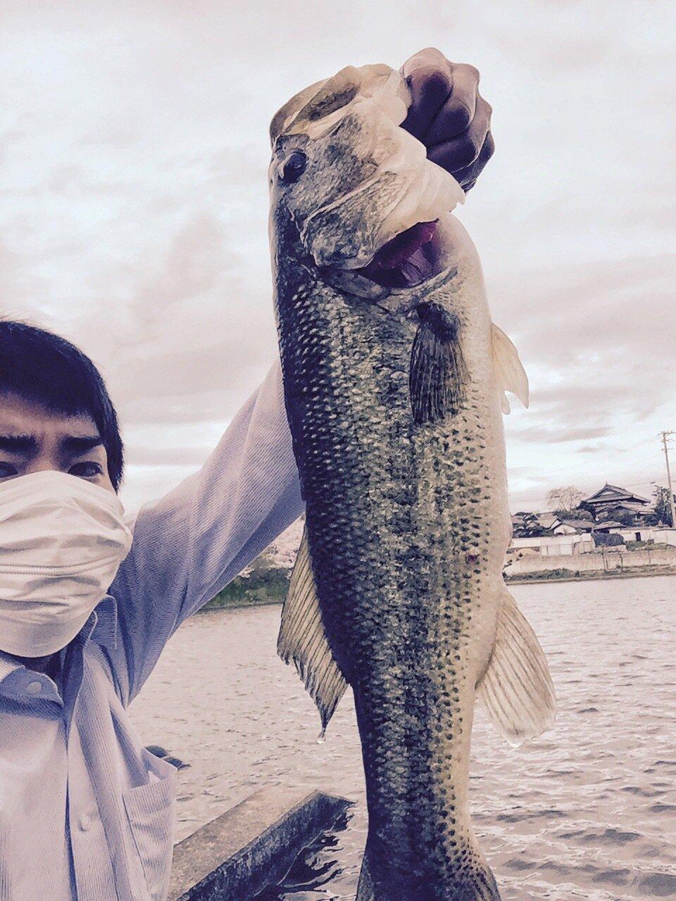 Nobさんの投稿画像,写っている魚はブラックバス