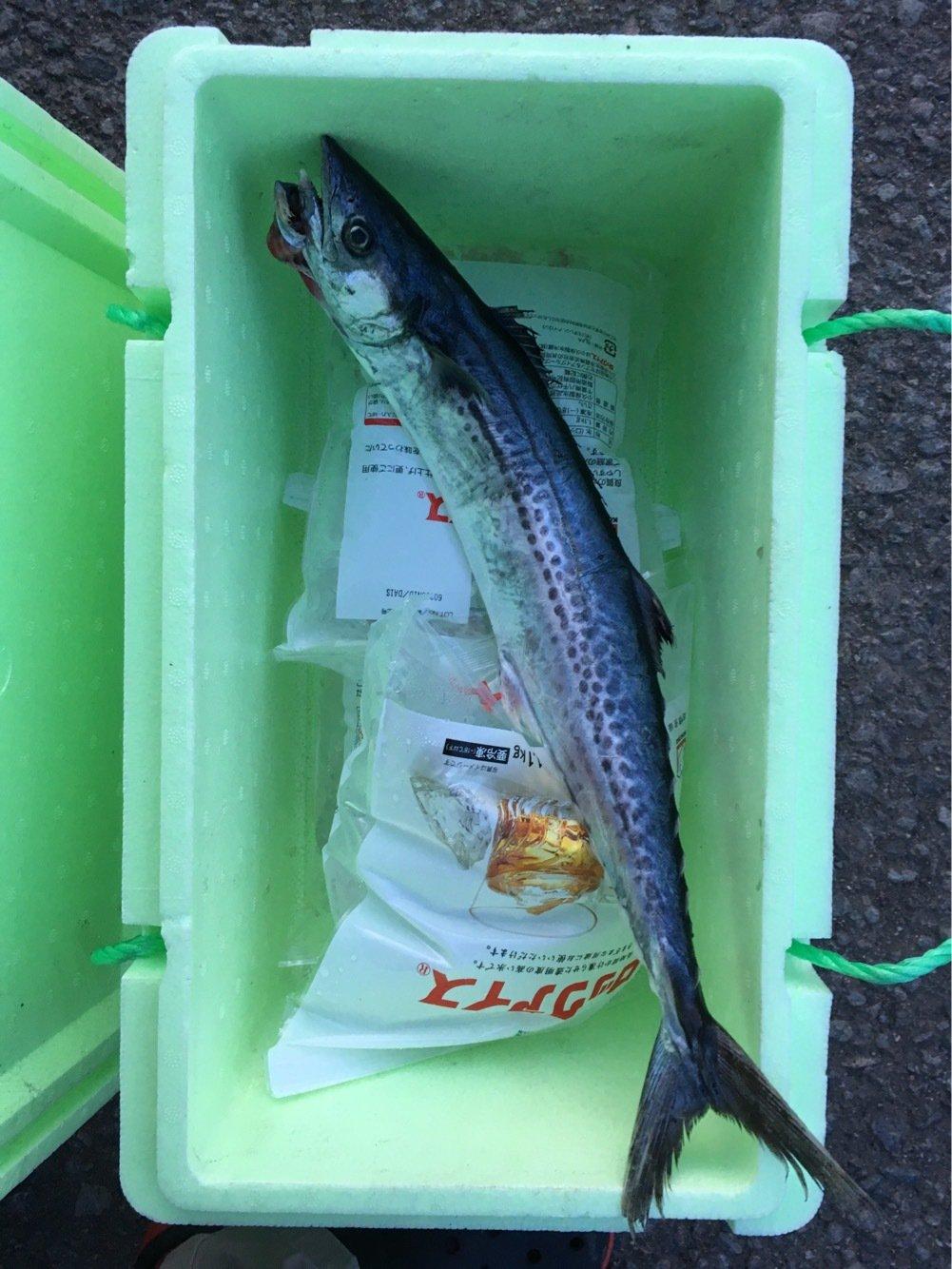 勇登さんの投稿画像,写っている魚はサワラ
