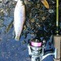 かぶやまさんの北海道滝川市での釣果写真
